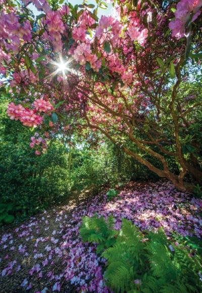 Arboretum – miejsce szczególne