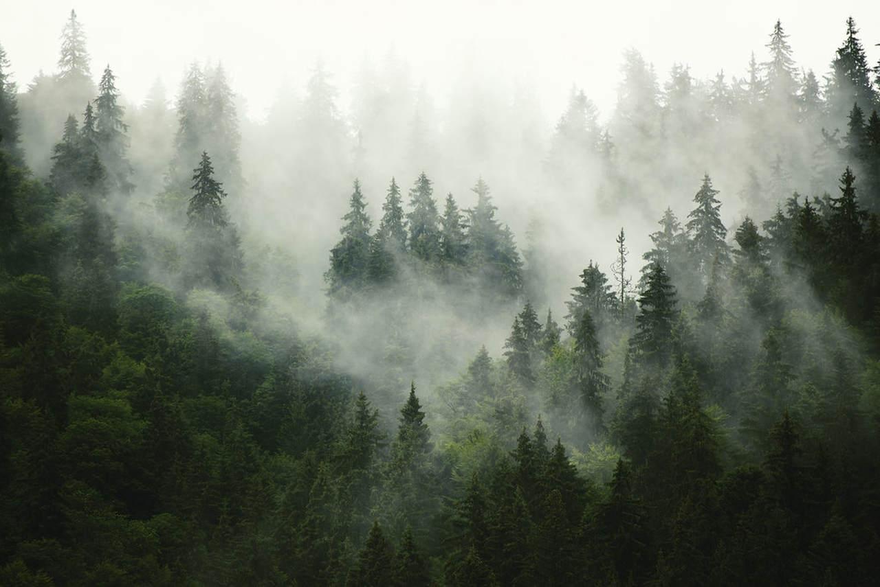 Gminy pełne lasów
